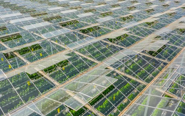 greenhouses with vegetables - оранжерея стоковые фото и изображения