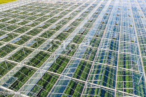 Drone point view on tomato greenhouse. Tomato farm.