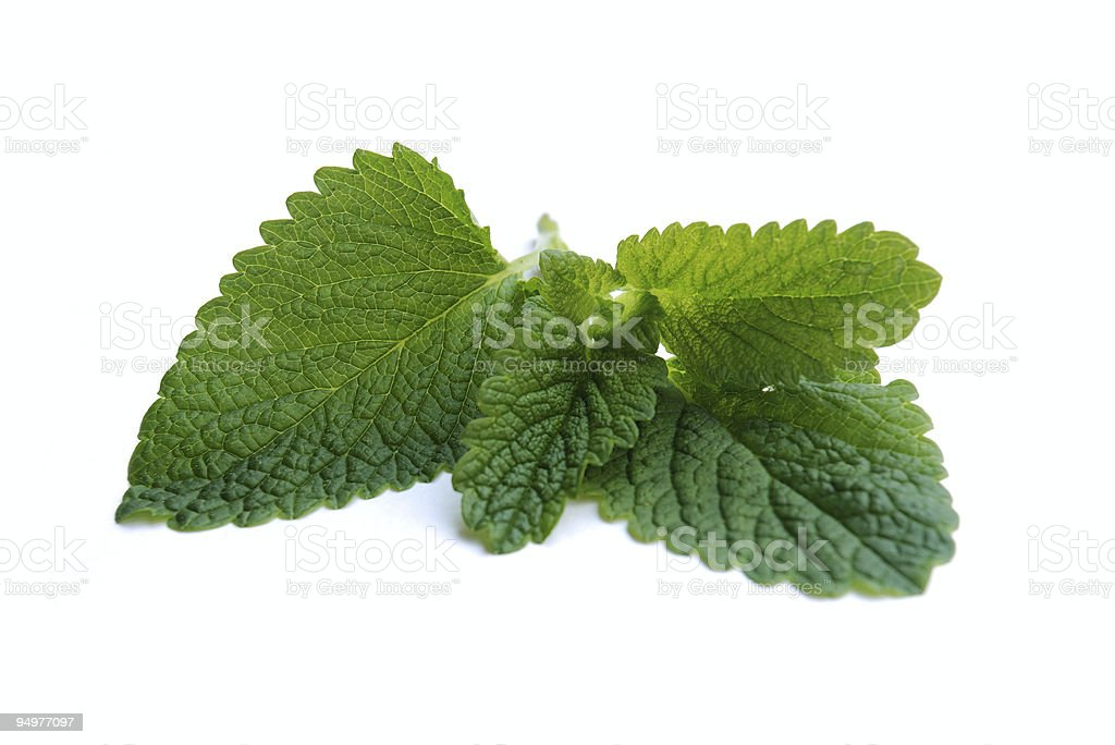Greenish fresh peppermint leaves with white background royalty-free stock photo