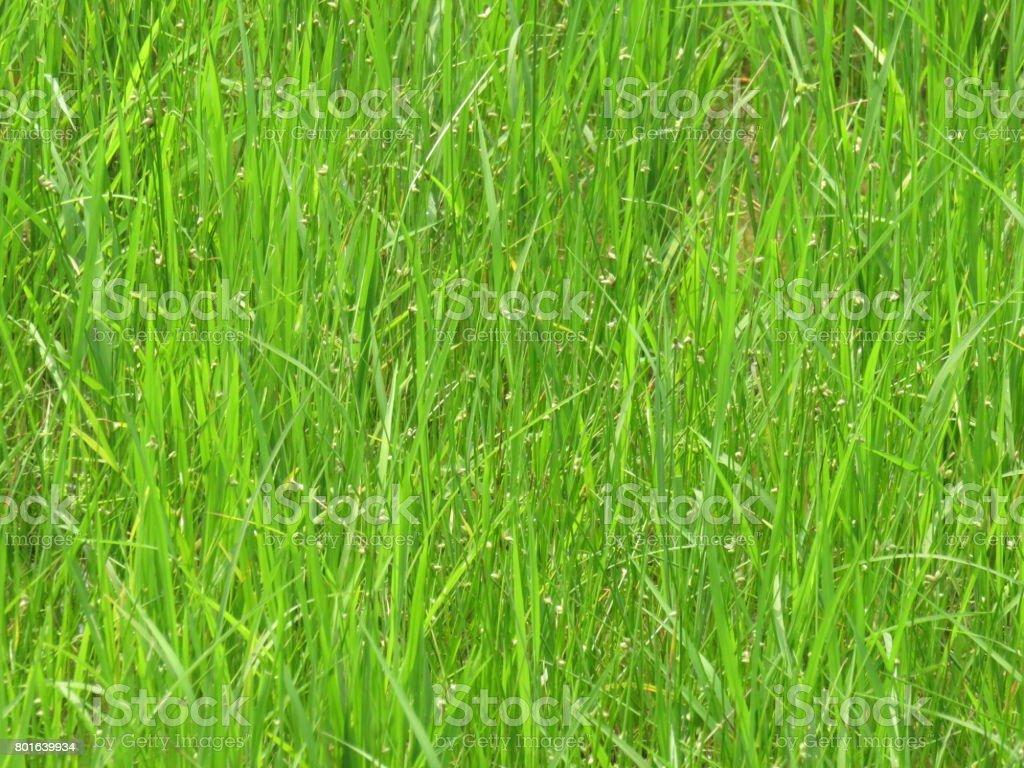 Greenish Garden stock photo