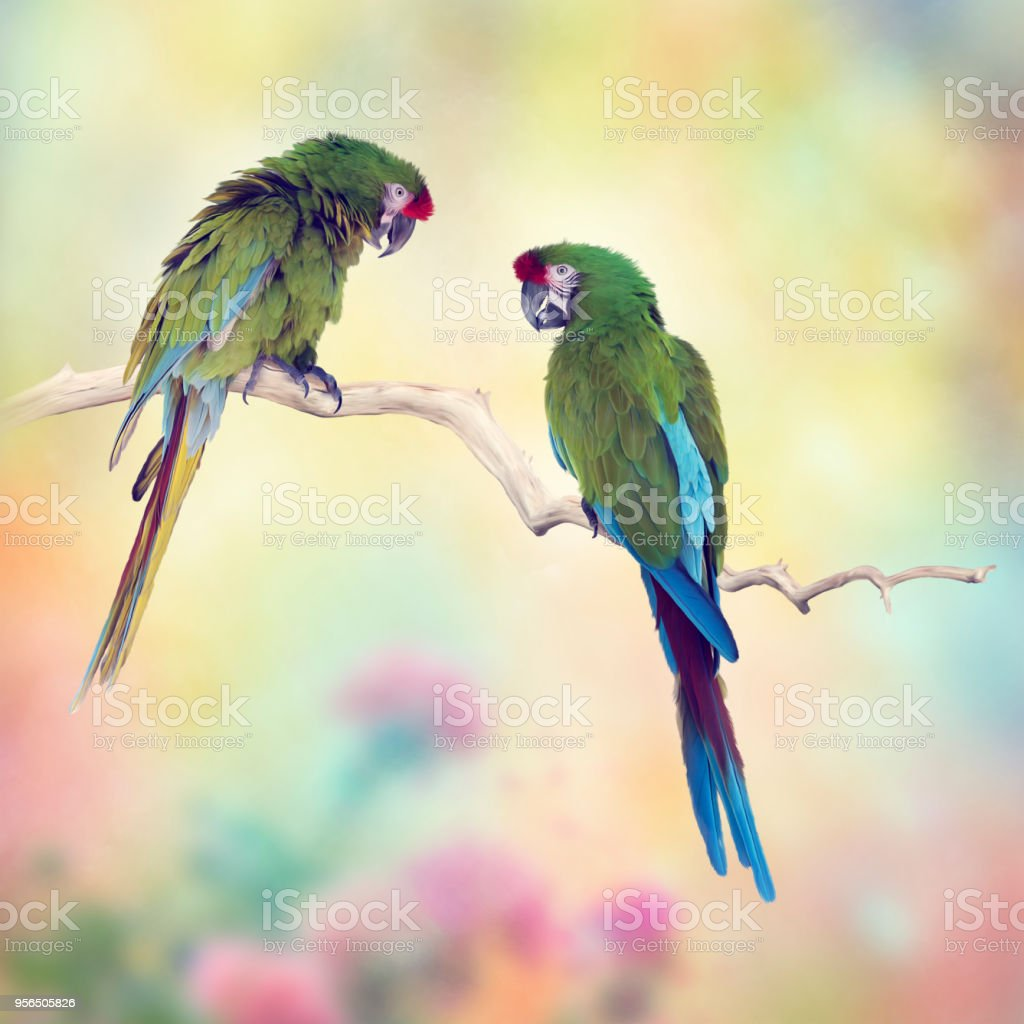 Greenl Ara Papageien hocken auf einem Ast - Lizenzfrei Blau Stock-Foto