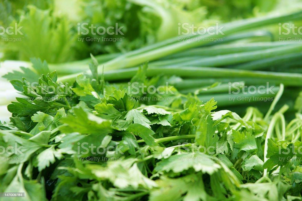 greens-parsley royalty-free stock photo