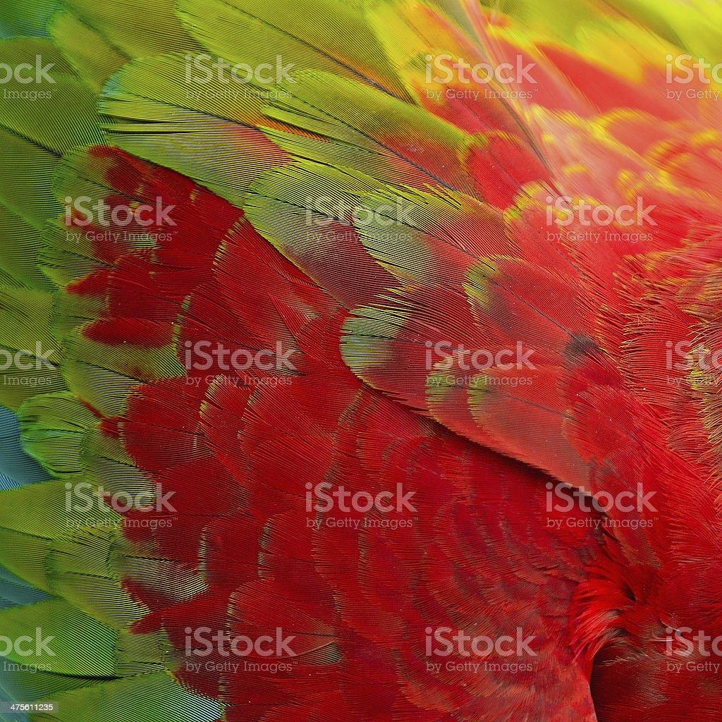 Greenwinged Macaw feathers stock photo