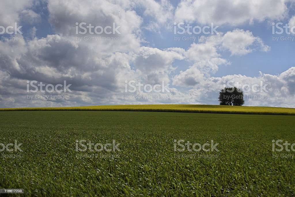 Green-yellow field and lonely tree - Landscape royalty-free stock photo
