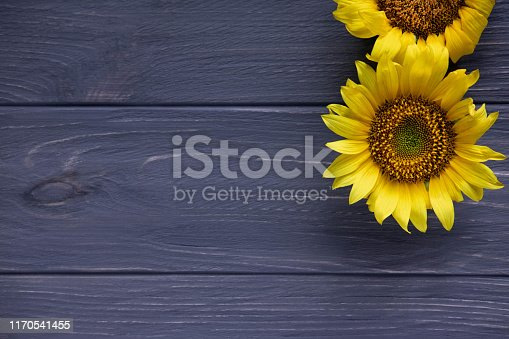 istock Greeting card design with sunflowers on gray wooden background. Frame for text with flowers of sunflower. Photo sunflowers with the place for copywriting. View from above 1170541455