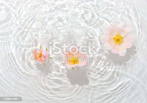 Greeting card with beautiful rose petals macro with drop floating on surface of the water close up. It can be used as background.  Flat lay, top view, copy space concept.