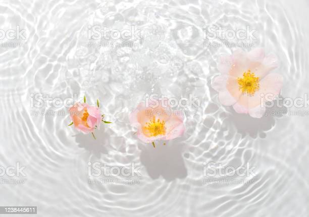Photo of Greeting card with beautiful rose petals macro with drop floating on surface of the water close up. It can be used as background.