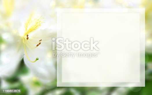 Mock up template with white azalea, light box and blurred bokeh background, soft focus, macro. Spring, summer floral background. Square frame for scrapbooks, photo albums, greeting cards, postcards, posters, flyers, posters, leaflets, invitations, gift certificates