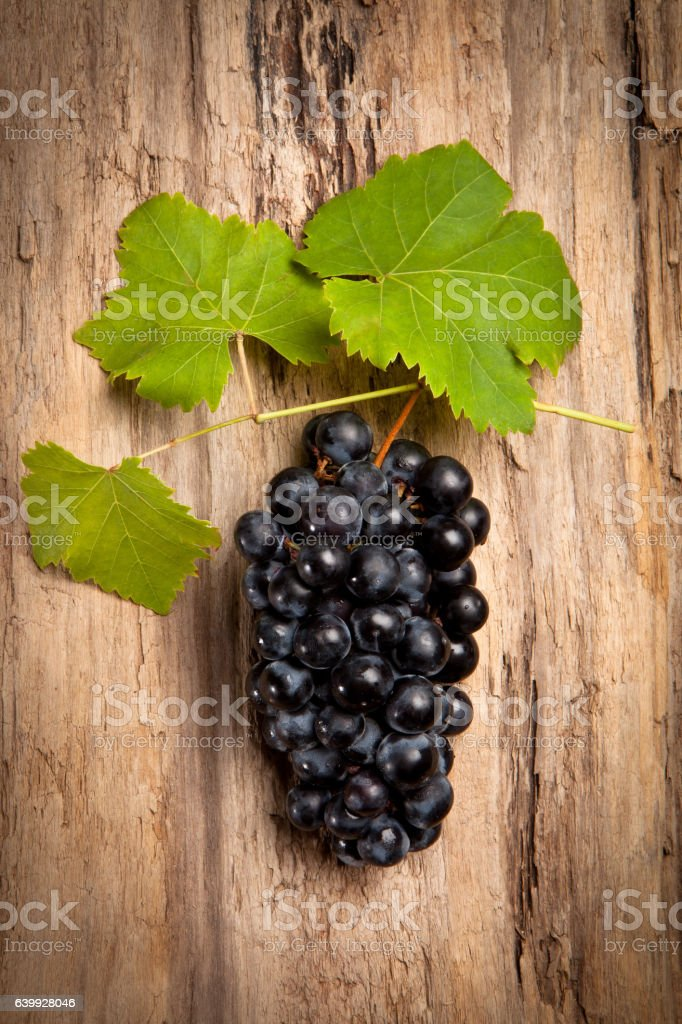 Grenache grape cluster stock photo
