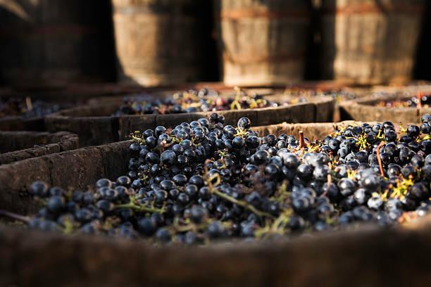 Grenache Trauben, Wein – Foto