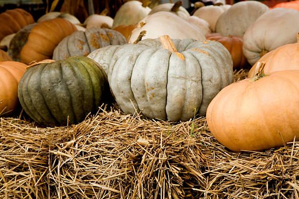 grey and green pumpkins stock photo
