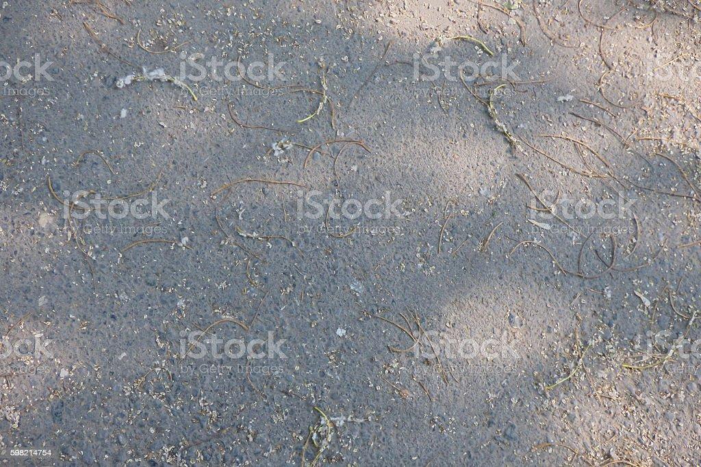 Grey asphalt with small poplar twigs foto royalty-free