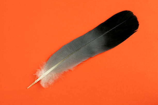 Grey bird feathers scattered on a vivid red background picture id1223260200?b=1&k=6&m=1223260200&s=612x612&w=0&h=2vzzucj dbyllt wt5tqbwhtoyy51r5ptx7esabtlbq=