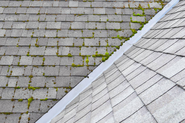 grey bitumen asphalt shingles roof Different two parts of grey bitumen asphalt shingles roof one part overgrown with green moss other clean. moss stock pictures, royalty-free photos & images