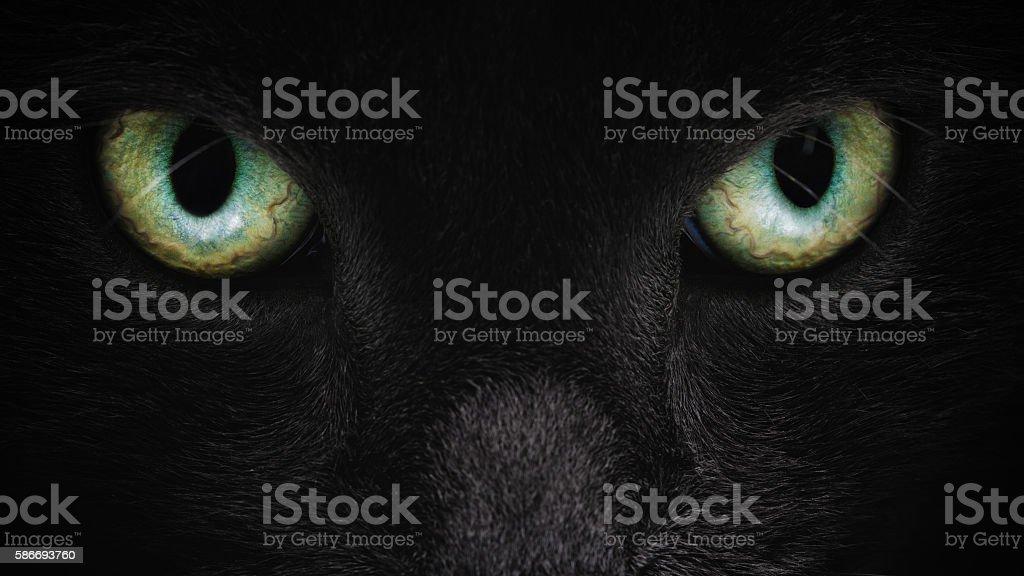 grey cat face closeup with green eyes stock photo