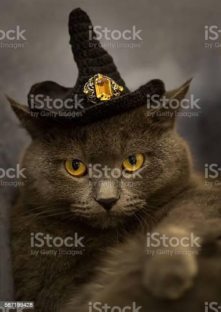 Grey cat in black halloween hat picture id587199428?b=1&k=6&m=587199428&s=612x612&h=skhc9ddvgfqlejfdji2sdbqk2pd7g1scpnutcya quy=