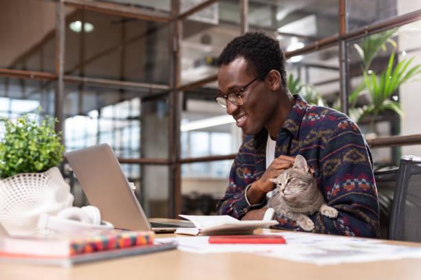 Grey cat sitting in office employees hands picture id1134074064?b=1&k=6&m=1134074064&s=612x612&w=0&h=xrf9sst11unrrgjprhr1gj9qbckcwyyugahrwlnrm1g=