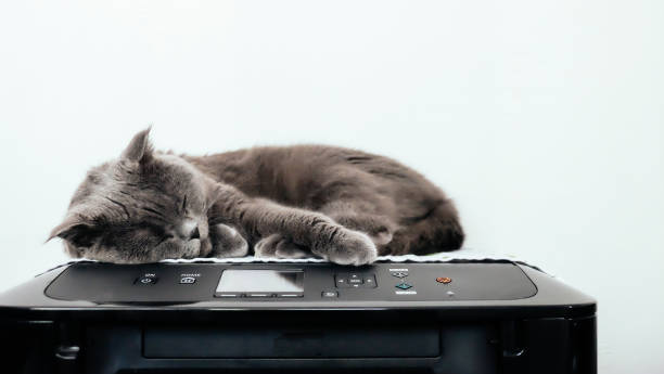 Grey cat sleeping on a printer picture id1152410646?b=1&k=6&m=1152410646&s=612x612&w=0&h=algo36ncgclq1ff6gciberbsimyom8szpfqtorgg42i=