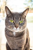 Close-up view of a grey cat with green eyes. Defocussed background