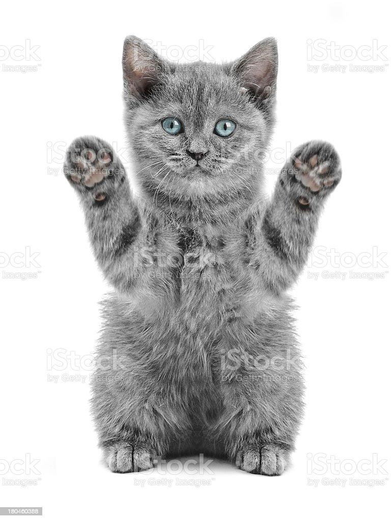cat – Foto
