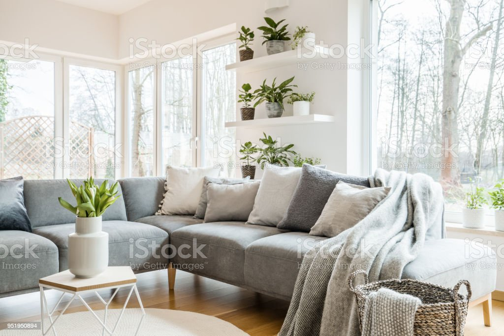Grey corner couch with pillows and blankets in white living room interior with windows and glass door and fresh tulips on end table stock photo
