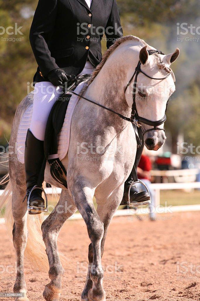 Grau Dressurreiten horse – Foto