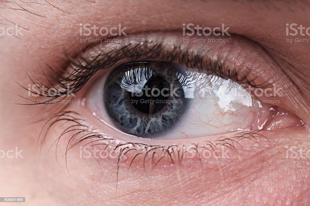 Grey eye macro shot stock photo