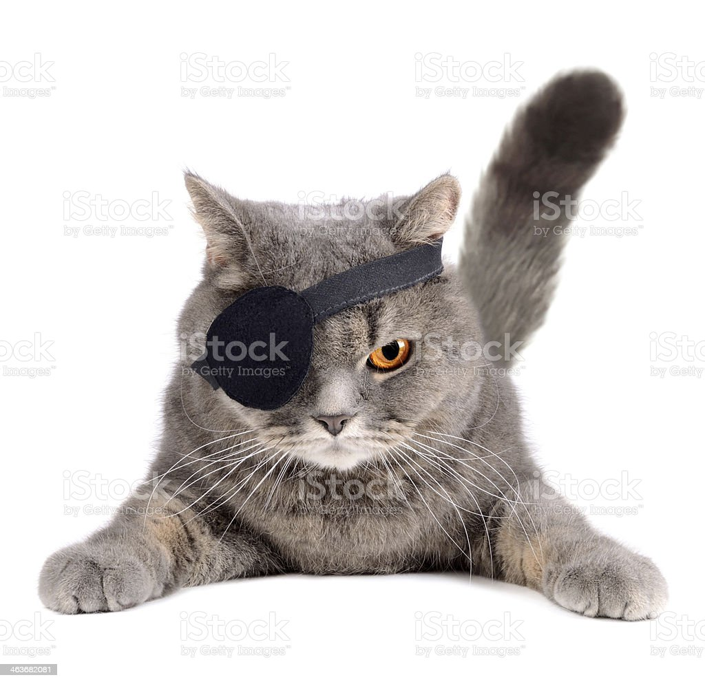Grey fluffy cat, scowling, wearing pirate eye patch stock photo