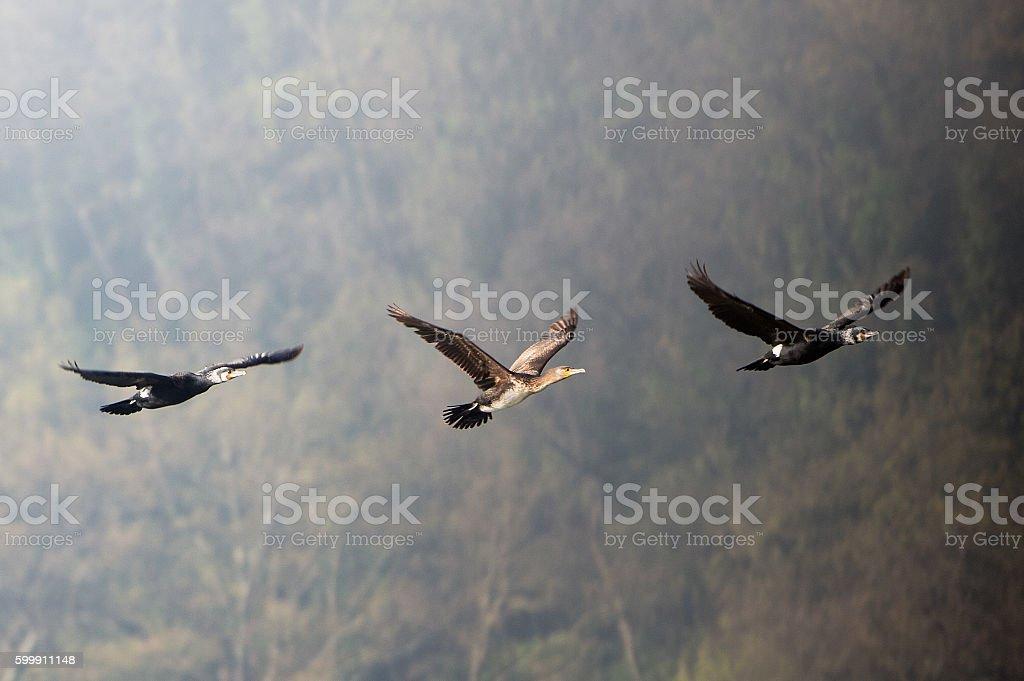 Grey heron (Ardea cinerea) - Natural Reserve Tevere-Farfa stock photo