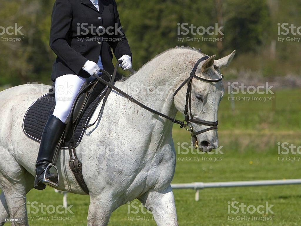 Grey Horse Dressage stock photo