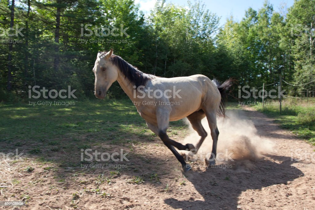 grey horse or mare stock photo