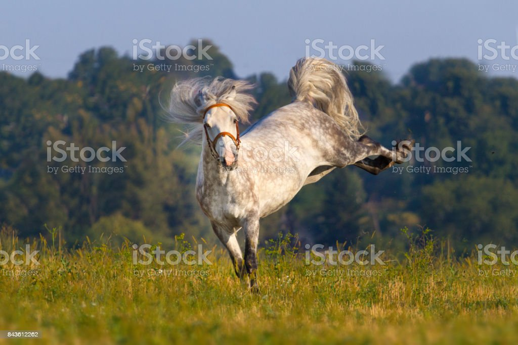 Grey horse with long mane stock photo