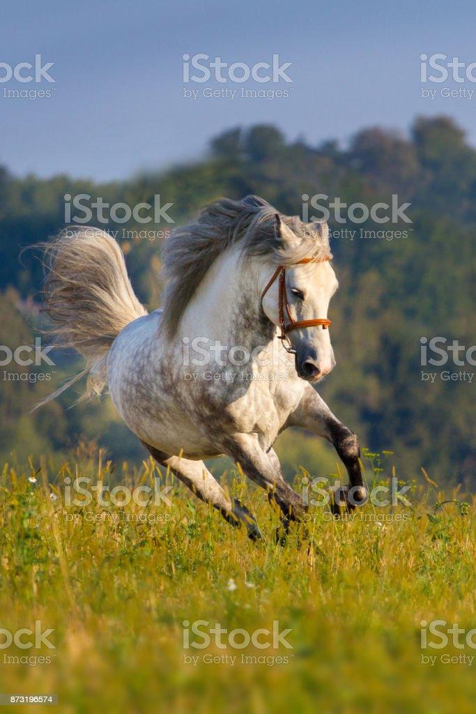 Grey horse with long mane stock photo