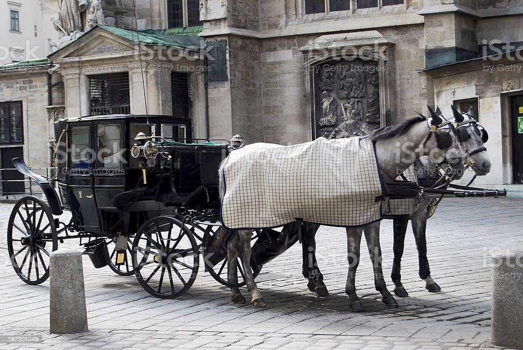 Grey horses royalty-free stock photo