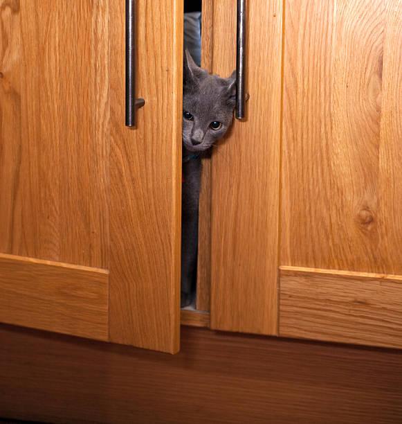graue kätzchen sie aus einem schrank - katzenschrank stock-fotos und bilder