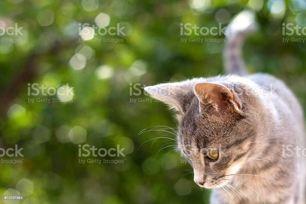 Graue Kätzchen  – Foto