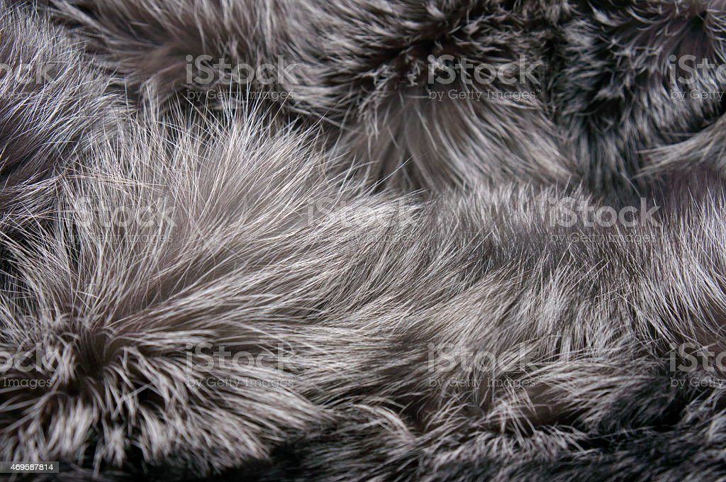 Grey long-haired fur stock photo