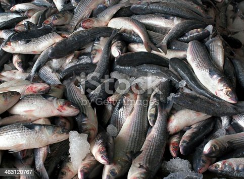 istock Grey Mullet Fish for Sale at an Auction 463120767