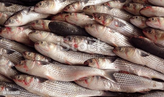 istock Grey Mullet Fish for Sale at the Fishmarket 531536333
