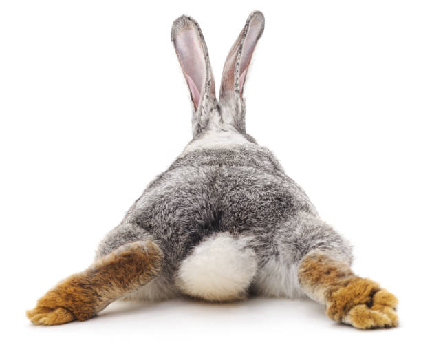 Grey rabbit. stock photo