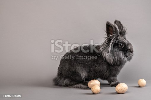 istock Grey Rabbit with Pink Easter Eggs in front  of Grey Backdrop 1138733935