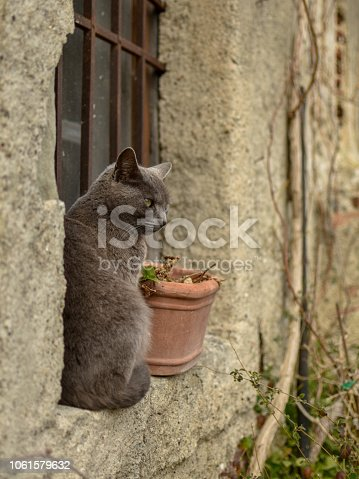 Grey short-haired cat sitting on a window of an old house in a village in Sicily, Italy, Europe