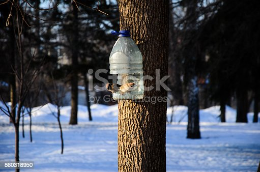 521620252istockphoto Grey sparrows on a feeder in a park 860318950