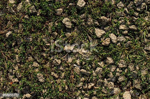 Grey stones among the green grass in the wild nature. Rocks and plants texture background.