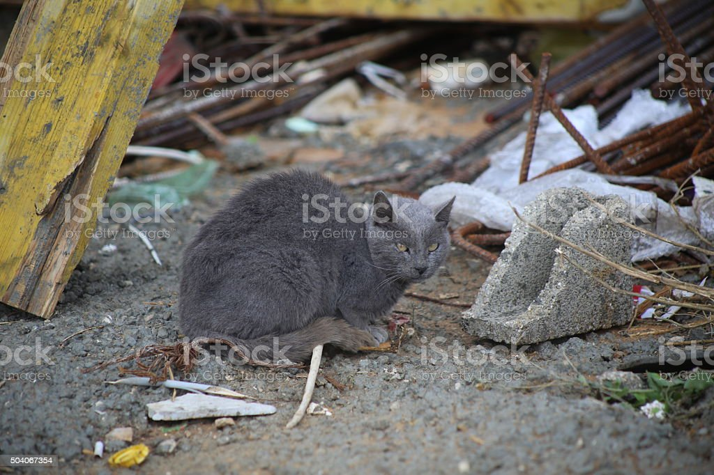 Grey Street Cat stock photo