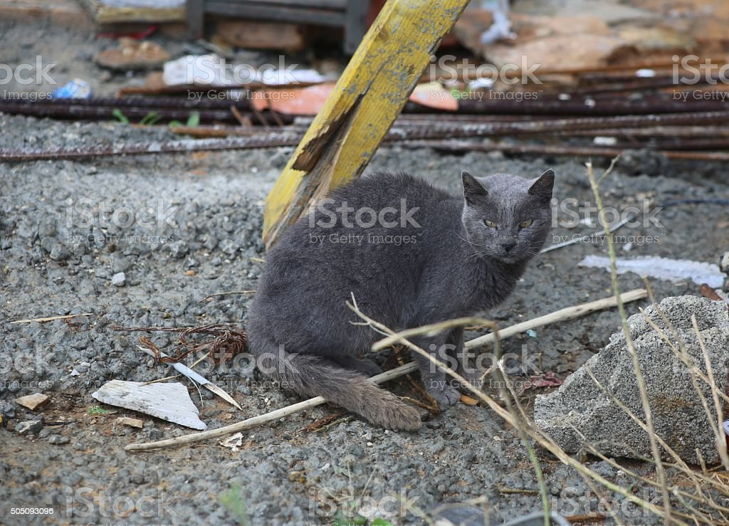 Grey Street Cat Sit in a Construction Site stock photo