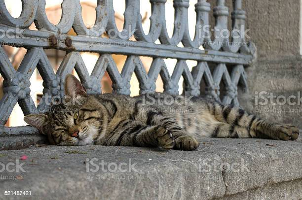 Grey striped cat lying on the fence of hagia sophia picture id521487421?b=1&k=6&m=521487421&s=612x612&h=igoghgpd6fwjpi zzruw7tvsjwxox 9ahezvtdla91m=