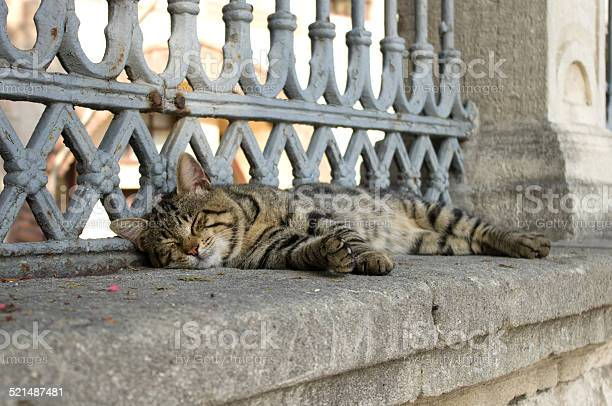 Grey striped cat lying on the fence of hagia sophia picture id521487481?b=1&k=6&m=521487481&s=612x612&h=fgkfunhperhgtkevn8podmkggidzrowuch8xajad8sm=