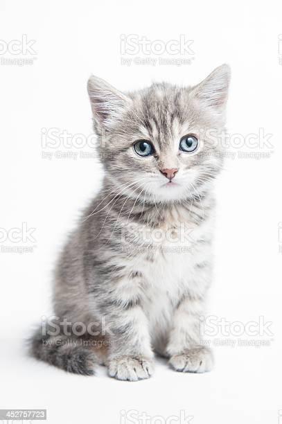 Grey striped kitten picture id452757723?b=1&k=6&m=452757723&s=612x612&h=zrqranfnyxj evfjpebsjq j1leqgfypuqzm86wt5bi=