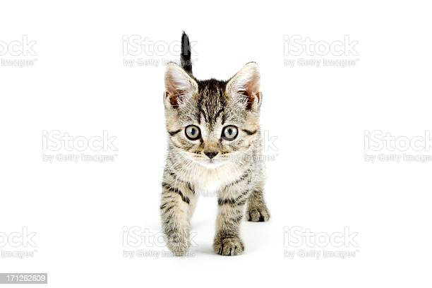 Grey tabby kitten with grey eyes picture id171262609?b=1&k=6&m=171262609&s=612x612&h=h1u 2w4xcqkj0tckqbrn6mxe4gq0yorrzu4vdpflmk8=
